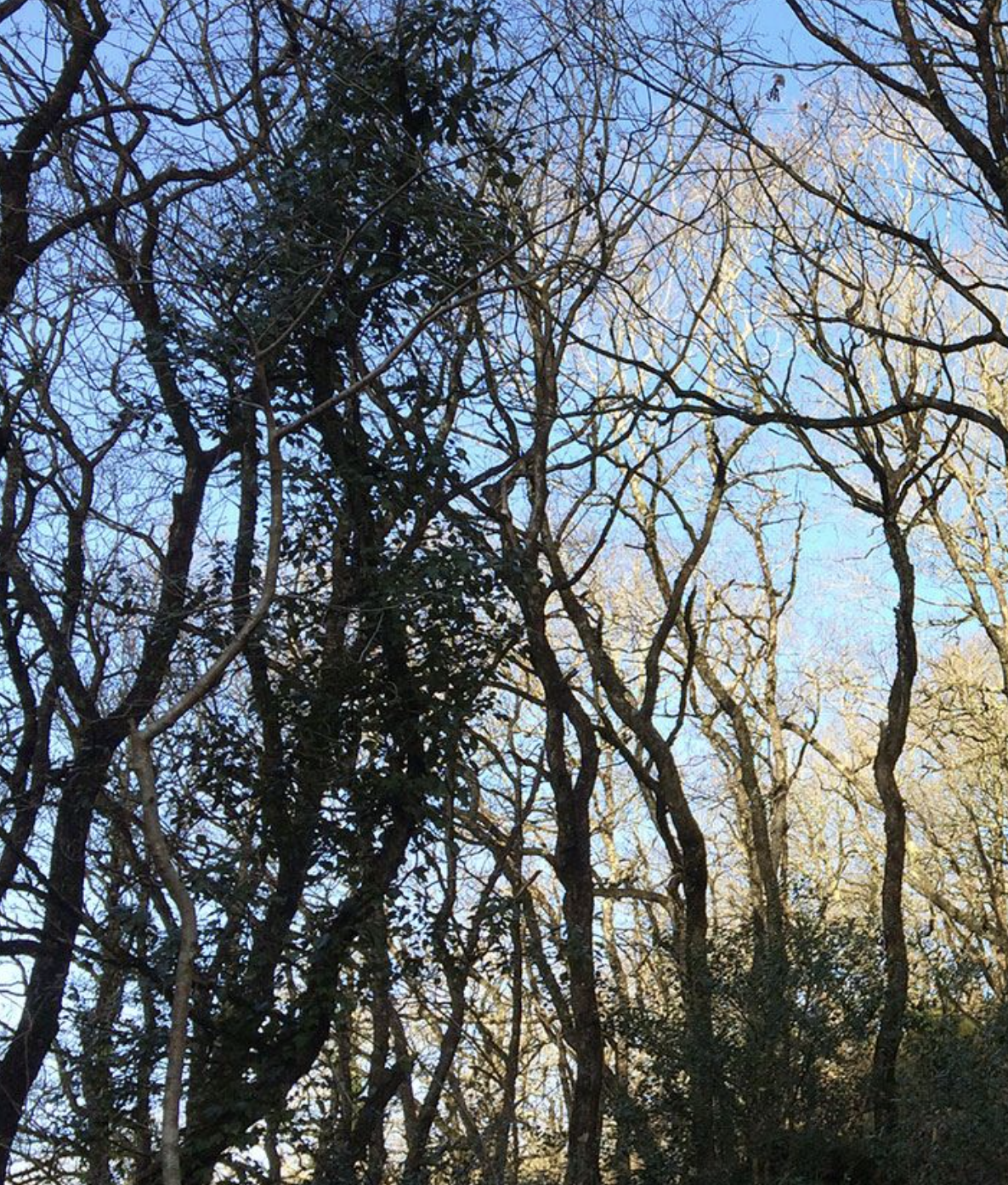 Empathy in the Urban Forest: A Guided Tree Tour